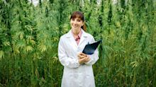 'High-paying jobs' in cannabis could await grads from new university program