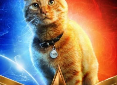貓奴們尖叫吧!《驚奇隊長》釋出最新花絮 滿滿都是喵星人!