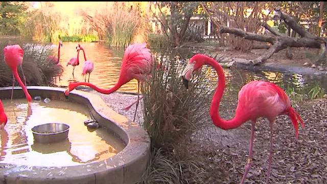 Zoo Making Big Changes to Deal With Drought Emergency