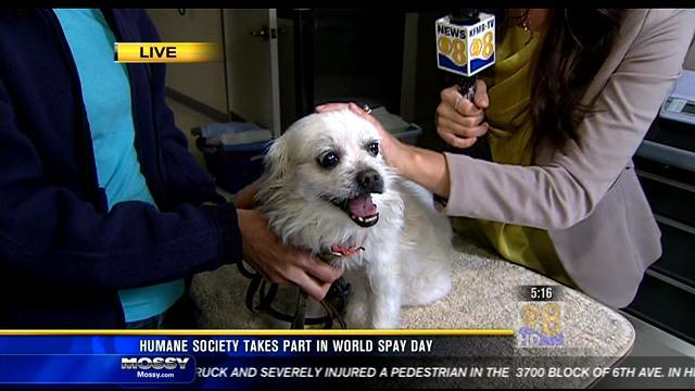 SD Humane Society takes part in 'World Spay Day'