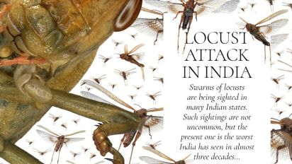 What is Locust Attack and Why Should India be Worried - Explained!