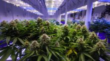Vireo Health Highlights Attractiveness of Private Cannabis Investments