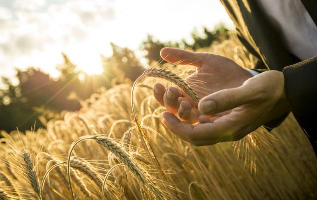4 Agriculture Operations Stocks Set to Dodge Near-Term Industry Challenges