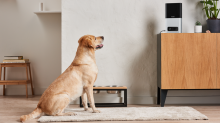 Get $80 off the PetCube bundle because your pets deserve treats on Black Friday, too