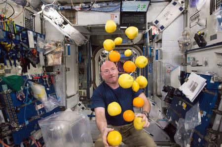 NASA astronaut Scott Kelly corrals the supply of fresh fruit that arrived on the Kounotori 5 H-II Transfer Vehicle (HTV-5), August 25, 2015. REUTERS/NASA/Handout