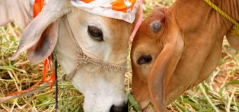 Low-caste pregnant woman attacked in India over dead cow