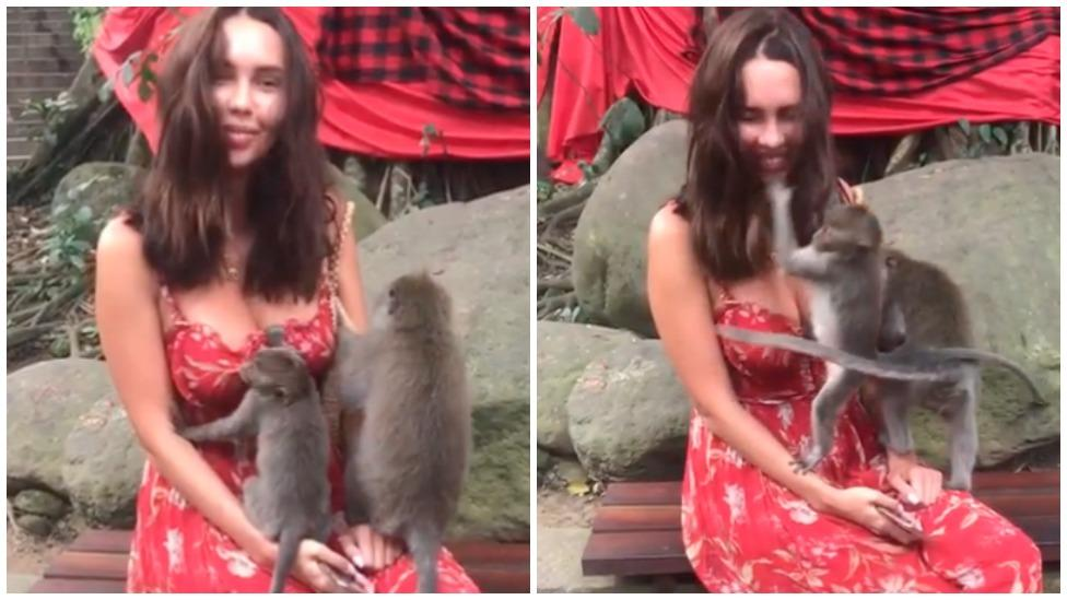Monkey gets very handsy with Instagram model