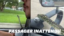 En Australie, un serpent surprend les passagers d'une voiture