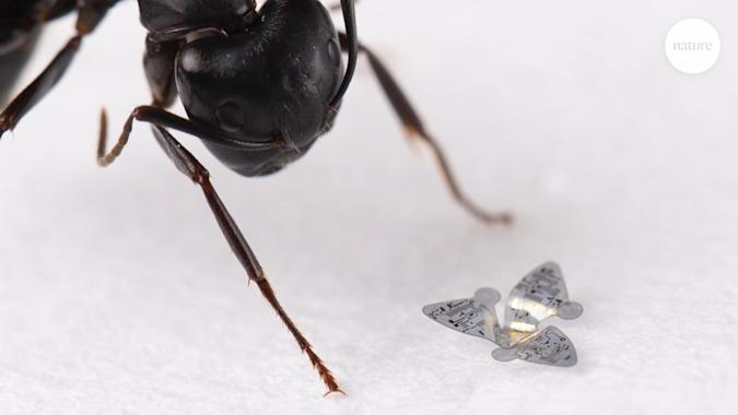 Nature-inspired robots are among the tiniest flying devices yet