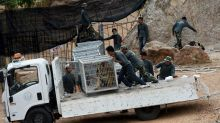 Dozens of tigers dead after confiscation from Thai temple