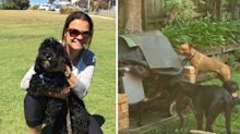 Four dogs break into yard and maul to death family pet as children run for cover