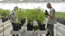 Stock Market Rally Pauses; Canopy Growth Dives On Earnings