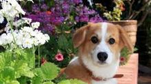 Factors Influencing Central Garden & Pet's (CENT) Q4 Earnings