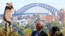 Vice President Pence tries hand at koala diplomacy Down Under