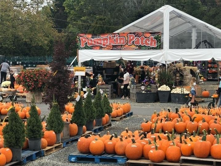 Despite the coronavirus pandemic, Maryland families can still have some fall fun. Here's where you can pick a pumpkin, Halloween events and a fall foliage guide.