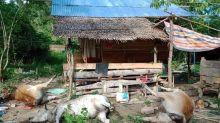 6 Warga Gorontalo Terjangkit Antraks Usai Konsumsi Daging Sapi yang Mati Mendadak