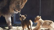 South Aust zoos to remain closed for now