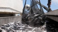 Mark Carney warns of 'market failures' from overfishing in world's oceans