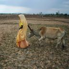 Indian voters boot out cow, happiness ministers in state elections