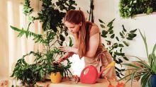 Jardim no apartamento: veja dicas para ter plantas em áreas internas