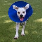 """Dog Needed """"Life-Saving Surgery' After Eating Paper Face Mask, Boston Rescue Says"""