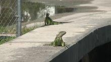 """Miami, un ecosistema tecnológico que busca sus propios """"iguanacornios"""""""