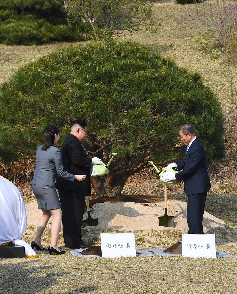 South facing, open aspect: The two men added soil around the roots of a tree, then sprinkled it with water (AFP Photo/Korea Summit Press Pool)