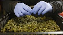 Millennial investors are flocking to the first marijuana company to hit the New York Stock Exchange (CGC)