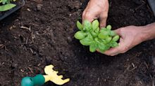 Here's where to shop for soil online ahead of gardening season in Canada
