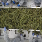 Aphria earnings: Aphria reports $120M loss, record pot sales