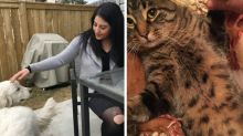 $5K reward helps Calgary couple's cat come back