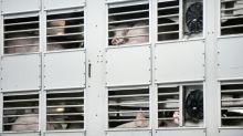 Umweltverbände machen vor Agrarministerkonferenz Druck für mehr Tierschutz