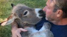 Man sings lullabies to baby donkey