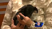 Pet Of The Week: YoYo and Bungie