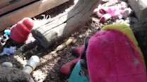 Raccoon Plays With Pink Toy