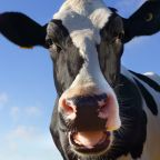 Devin Nunes' Cow Twitter Account Gets More Followers Than Nunes