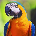 Stranded Parrot 'Turns Air Blue' Cursing Out Firefighter During Rescue Attempt