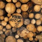 Poland reacts coolly to EU court warning of fines for logging