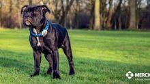 Merck Animal Health Receives U.S. FDA Approval of BRAVECTO® (fluralaner) Monthly Chews