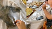 飯吃到一半虎斑貓主動「封膜上桌」 網笑:要加菜嗎?