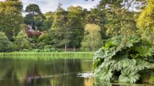 National Trust to reopen some parks and gardens next week – but you'll need to book a ticket to visit