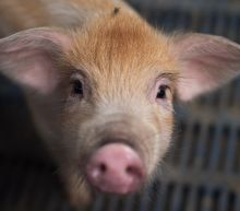 China pork and farm shares jump on trade threats