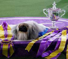 The winner of the Westminster Dog Show the year you were born