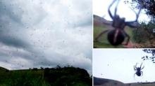 De pesadilla... La 'lluvia' de arañas que aterrorizó a Brasil