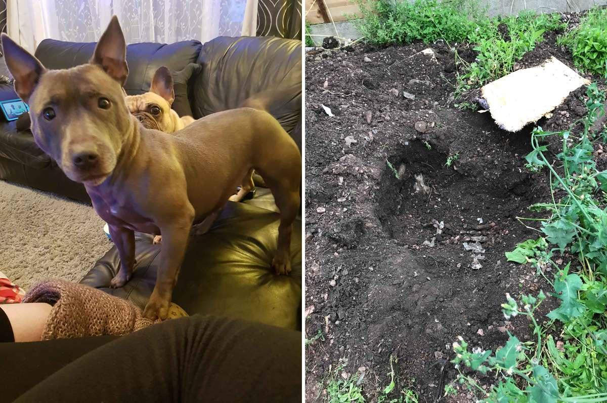Thug jailed for beating dog to death and burying her in garden
