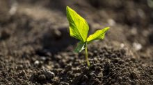 Fertilizer Industry Gaining Stability: 3 Stocks to Buy Now