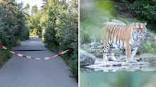 Zookeeper mauled to death by tiger in front of tourists