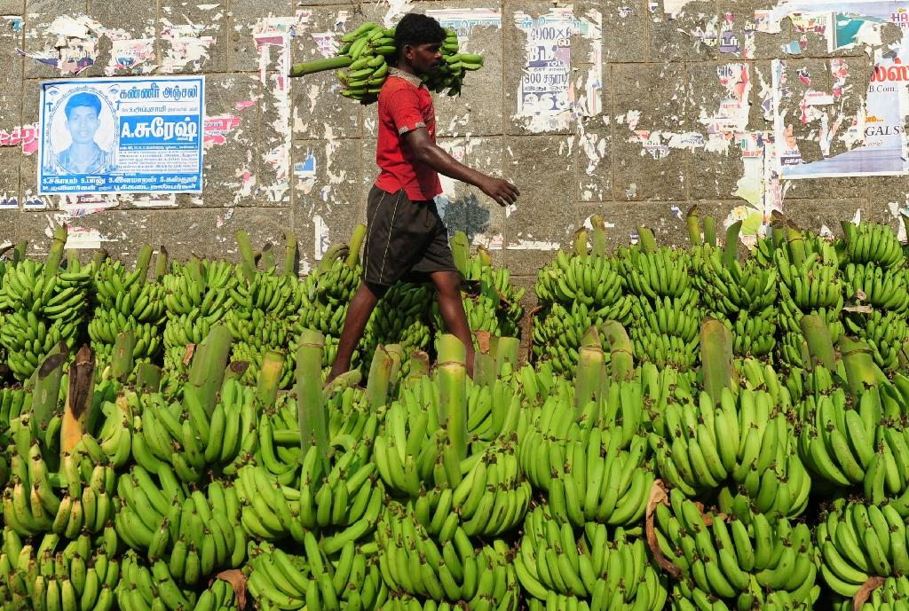European Union rules on the shape of bananas have long been a symbol in Britain of the red tape imposed by technocrats in Brussels