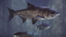 Invasive Asian carp found near Great Lakes beyond electrified barrier