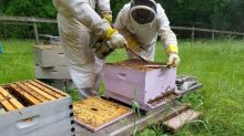 Beekeepers are stealing each other's hives to survive the cutthroat industry